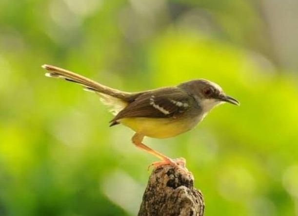 Mau Bisnis Ternak Burung, Ini Jenis burung yang Cocok