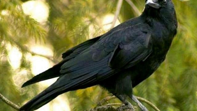 Burung Masuk Rumah Pertanda Apa? Yuk Cari Tahu